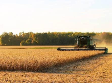 Safra recorde de soja impulsiona exportações nordestinas