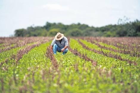 Com prorrogação da Lei 13.340, Banco do Nordeste intensifica ações para regularizar dívidas com produtores rurais