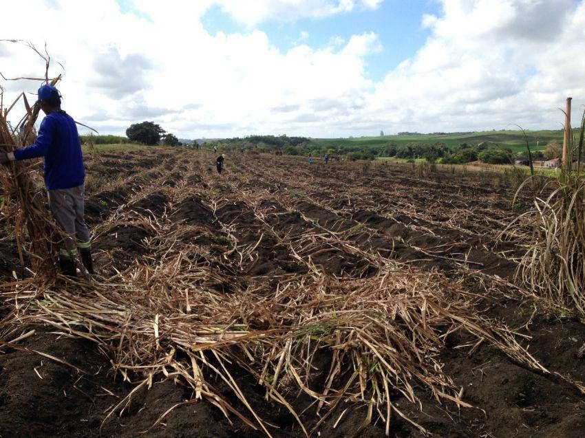 Estiagem causa queda na produção da cana-de-açúcar em Sergipe