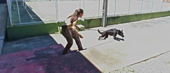 Canil da Core inicia treinamento de mais dois cães para detecção de entorpecentes
